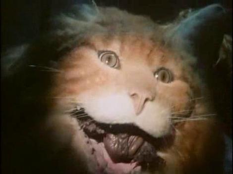 Uninvited Cat
