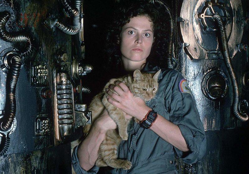 Alien Ripley cat
