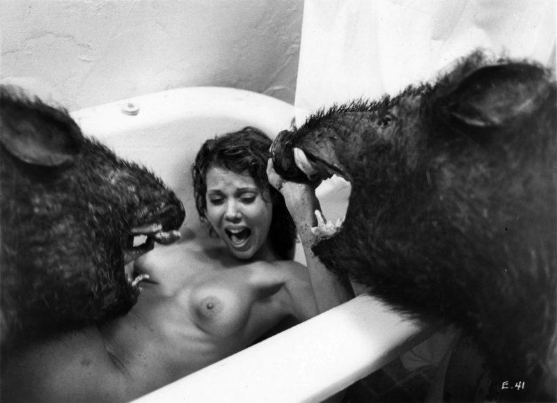 Evilspeak boars
